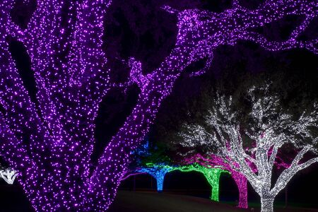 tightly: Color LED lights wrapped tightly around trees. Each tree is wrapped with a different color.