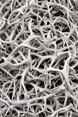 A pile of sun bleached elk antlers for background texture and pattern Stock Photo