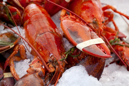 raw lobster: Lobsters on Ice