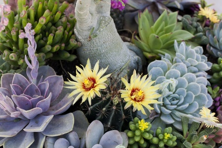 Close up of different succulent cactus plants in a garden  Stock Photo