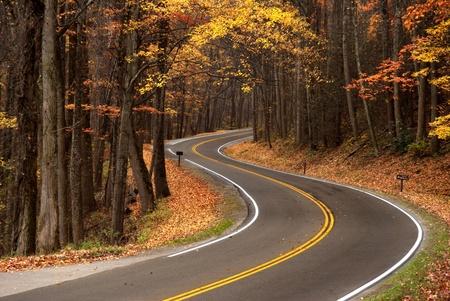 숲을 통과하는 산악 도로의 S 커브, 가을 동안 그레이트 스모키 산맥에서 총을 쏜다.