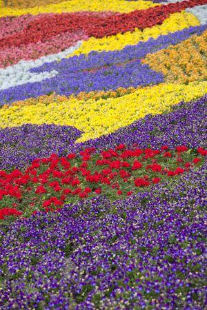 Diversity of flowers in spring garden photo