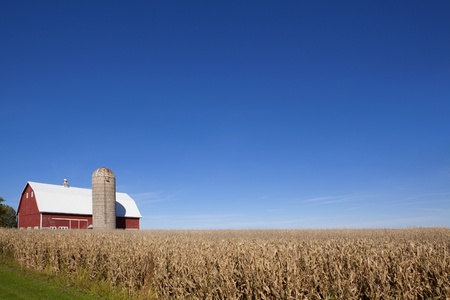 Scenic farmland in southern Minnesota with red barn silo and corn field just before harvest  Off center for copy space