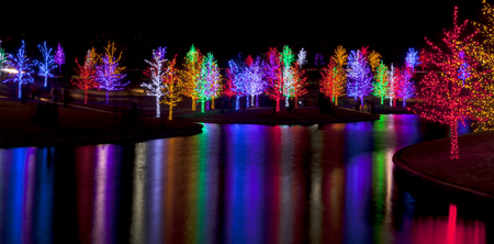 long lake: Trees tightly wrapped in LED lights for the Christmas holidays reflecting in lake. Each tree is wrapped in one color.