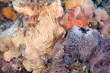 hard coral: Tropical coral reef scene with hard and soft coral and sponges Stock Photo