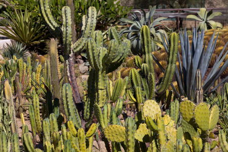 types of cactus: A garden with many different types of cactus.