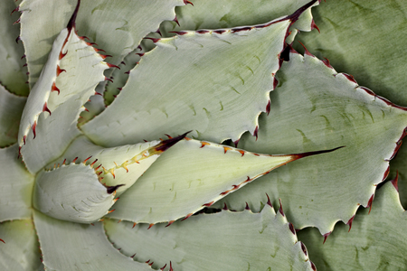 Close up of succulent cactus plant with sharp edges