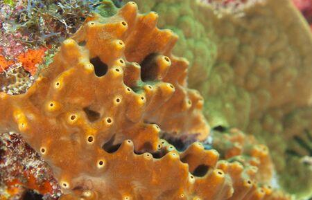 Closeup of Sponges underwater Stock Photo