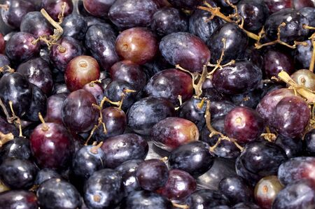 winemaking: Grapes at vineyard for winemaking