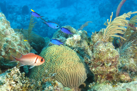 brain coral: Tropical fish on a coral reef