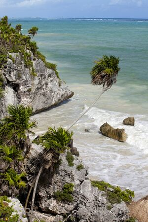 mayan riviera: Rocky Coastline and tropical palm trees in Tulum, Mexico