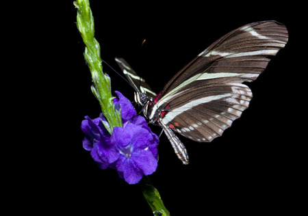 Butterfly and Flower closeup Banque d'images