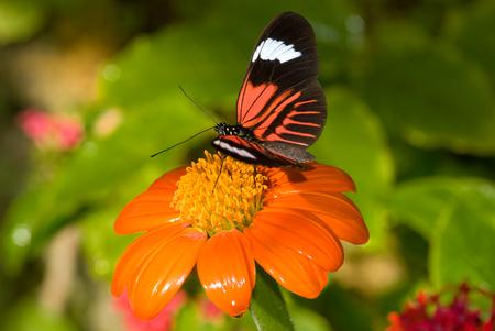 Closeup of a Piano Key butterflies