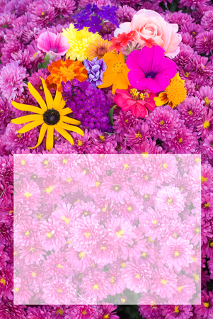 Colorful flowers with faded area for text