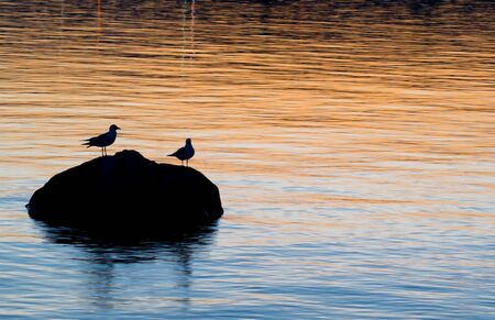 Silhouette of gulls on rock with colors of sunset reflecting in water.  Off center for copy space