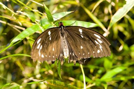 Butterfly (closeup)