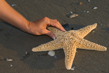 echinoderm: Finding a starfish on a beach Stock Photo