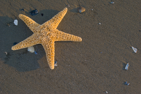 marinelife: Starfish on beach, off center for copy space Stock Photo