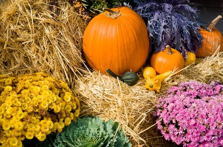 Thanksgiving Harvest with pumpkins, gourds, Indian Corn, plant and flowers on bails of hay