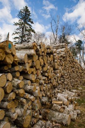 logging industry: Logging - Large pile of cut tree trunks