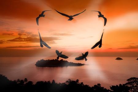 Valentine bird photo