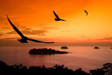 Seagull hover between sunset and orange sky. Stock Photo - 11766887