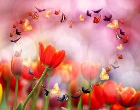 Colorful tulips with morning light. photo