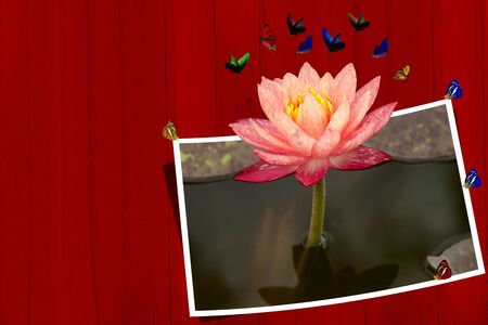 Pink lotus with picture frame and butterfly photo