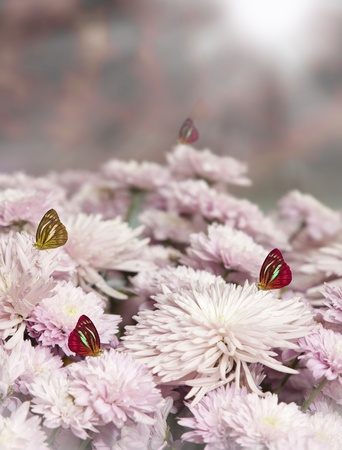 Butterfly and pink flower with sunrise on morning time  photo