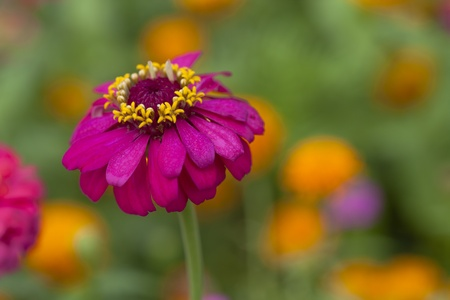 seem: Zinnias seem especially favored by butterflies, and many gardeners add zinnias specifically to attract them.