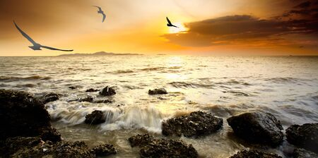 spring tide: silhouette bird with sunset and sea in Pataya beach, Thailand. Stock Photo