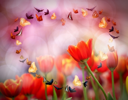 asian tulips: Colorful tulips with morning light  Stock Photo