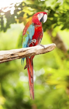 Couple of macaw parrots on nature background photo