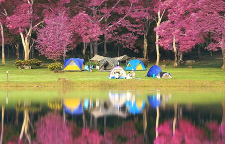 camping tent: Landscape of pink garden and reflex in the river  Stock Photo
