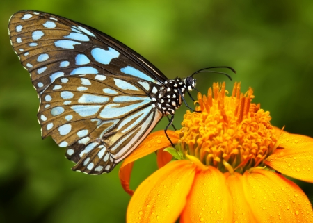 Blue butterfly fly in morning nature Stock Photo - 15323421