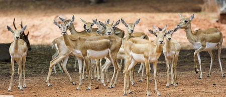 herd deer: Group of cute deer in wild
