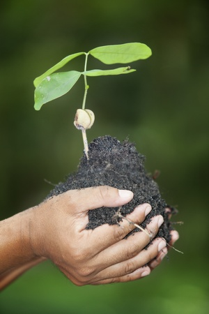 hands holding a green young plant  Symbol of spring and ecology concept Stock Photo - 16147745