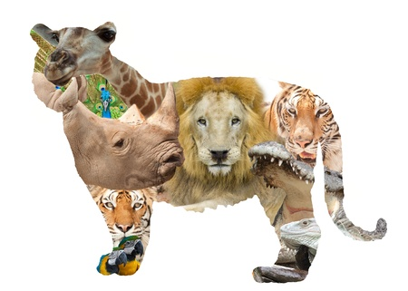 big5: Many type animal in a tiger frame.