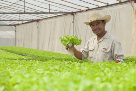 BANGKOK - JAN 4: An unidentified Thai farmer show hydroponic plant from Hyroponic fastival on Jan 4, 2013 in Bangkok, Thailand. The festival of hydroponic in SE Asia.