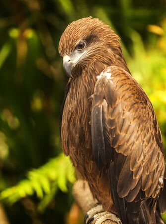 Hawk in nature background photo