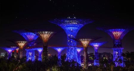 artificial lights: Landscape of tree garden