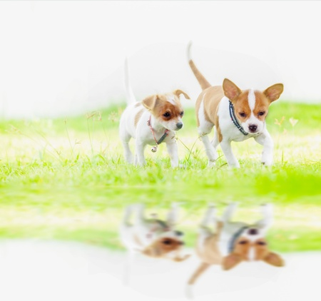 going crazy: Cute baby dog runing in nature background