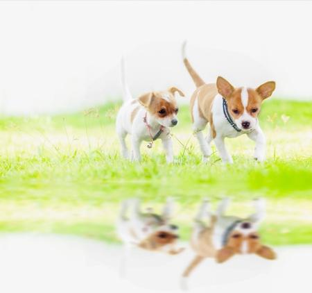 perros jugando: Lindo runing perro del beb� en el fondo de la naturaleza