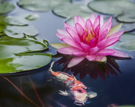 강 gardent에 핑크 로터스 FLOT. 스톡 콘텐츠