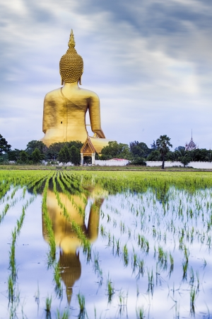 field of thai: A biggest Buddha in Thailand, Ang Thong province