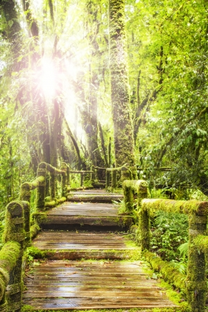 pathways: Moss around the wooden walkway in rain forest - Chiang Mai Province, Thailand Stock Photo