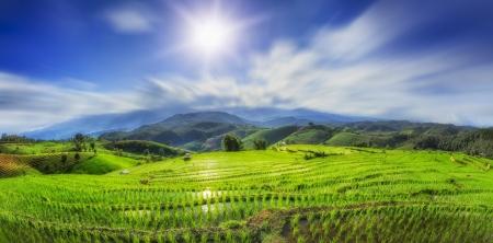 緑豊かな緑の水田および日没、アジアで