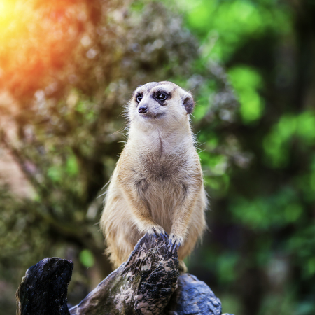 eyes cave: meerkat sit on sand with nature frame