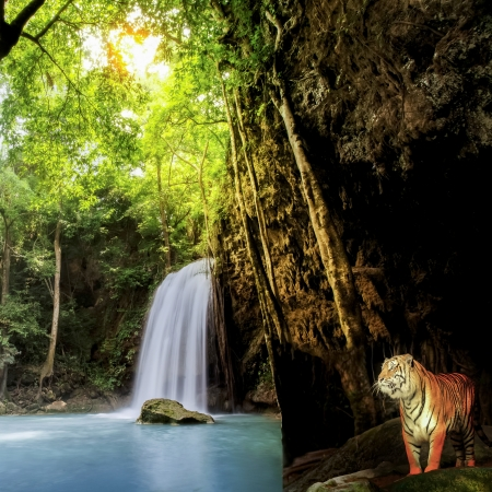 Tiger in the jungle with waterfall and sun beam photo
