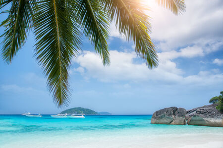 Tropical white sand beach with palm trees. Similan islands, Thailand, Phuket. photo